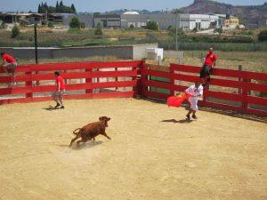Corrida Palma avec vachettes