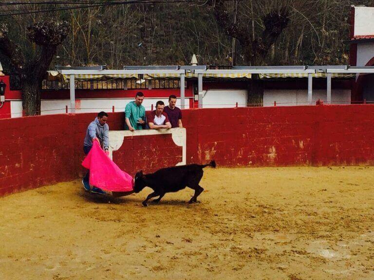 Baby Bull Running Seville