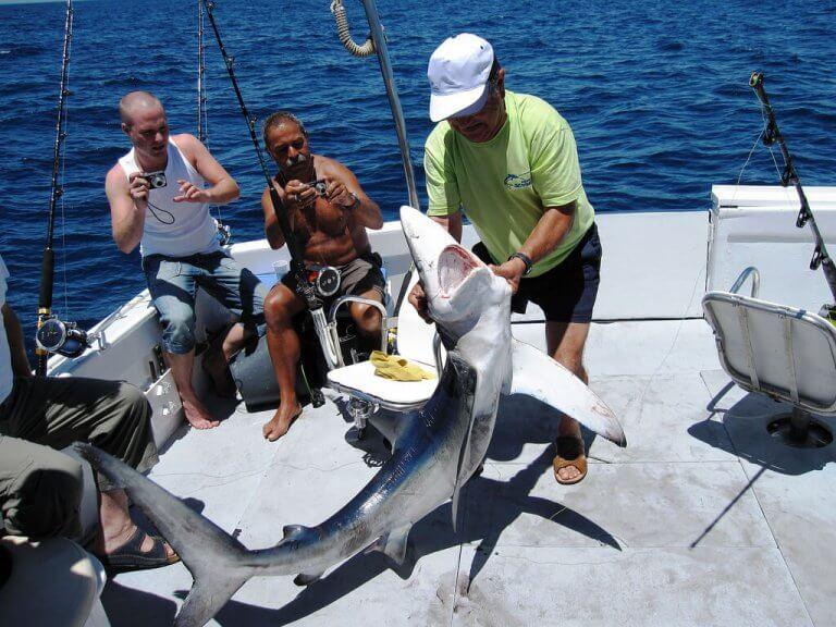 Algarve shark fishing